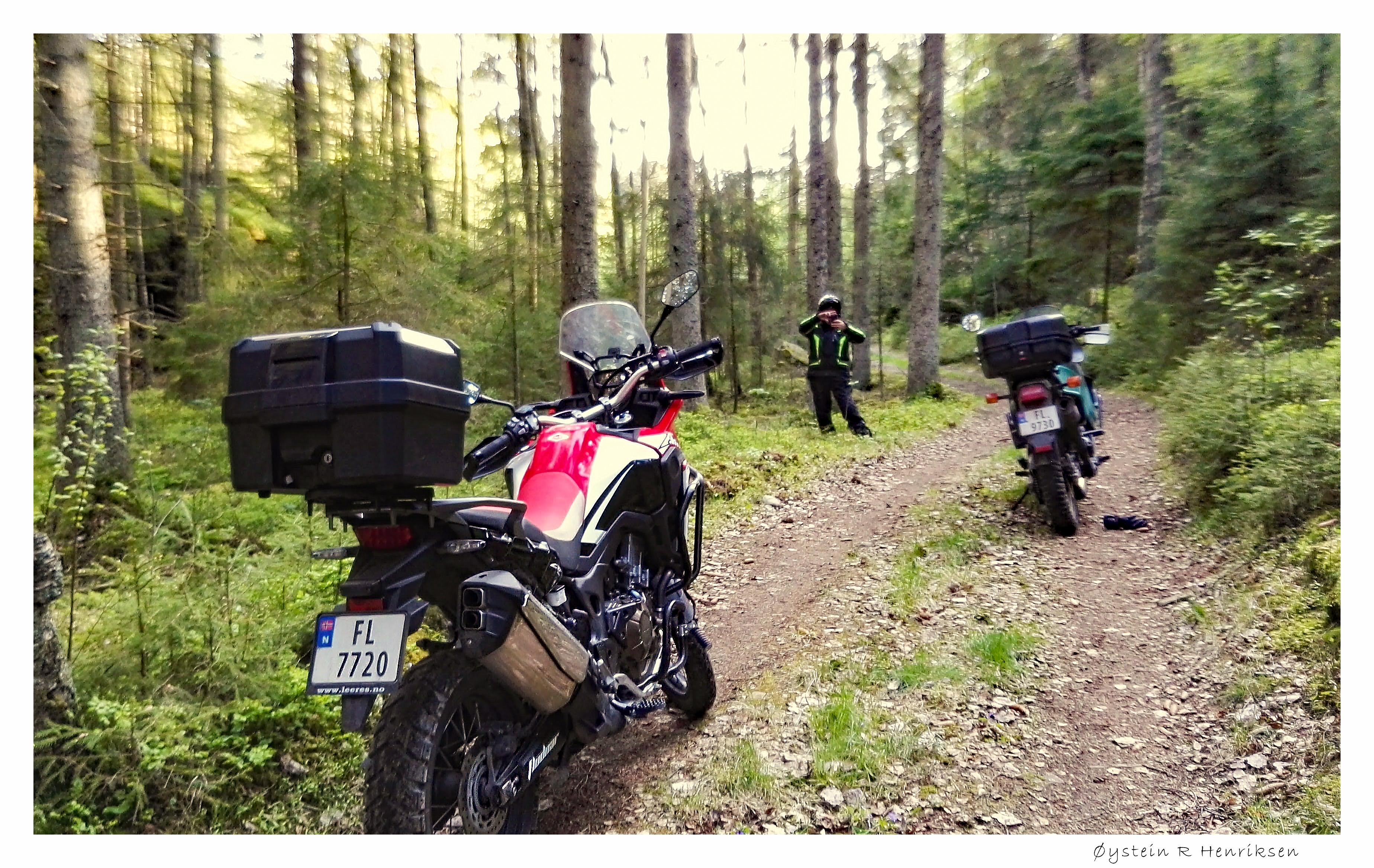 I skogen_2